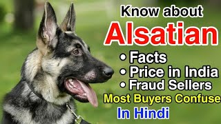 Alsatian dog breed facts | Price in India | Fraud sellers of Alsatian | in Hindi