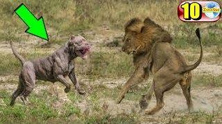 10 อันดับสายพันธุ์สุนัขสายพันธุ์ดุ จนต้องห้ามเลี้ยง!!!