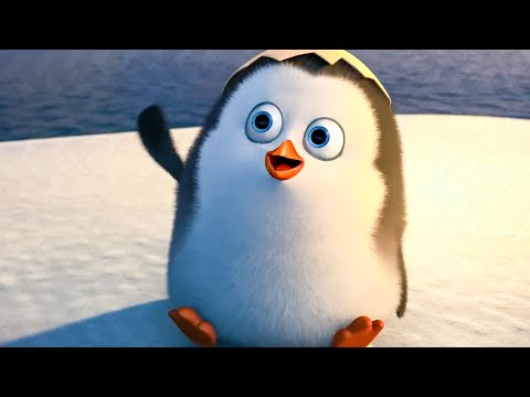 Finding Baby Private Scene - PENGUINS OF MADAGASCAR (2014) Movie Clip