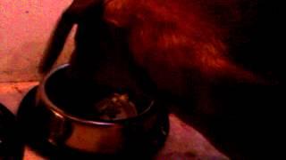 Dogs eat their meal / Psy jedzą swój posiłek