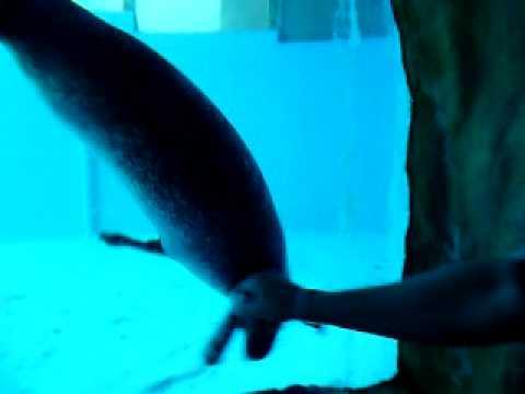 Zoo Marine Portugal Albufeira