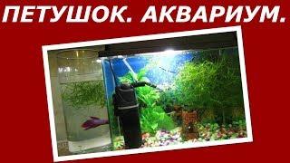 Петушок - Бойцовская Рыбка.  Обновление Аквариума.