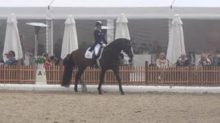 FRANZISKUS & Ingrid Klimke Warm-up at Horses & Dreams meets Austria 2017