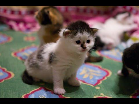 Thumbnail for Cat Video Live Stream Kitten Cam