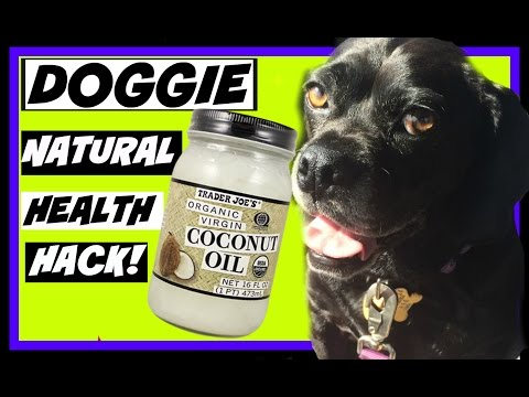 Coconut Oil Health Benefits For Dogs
