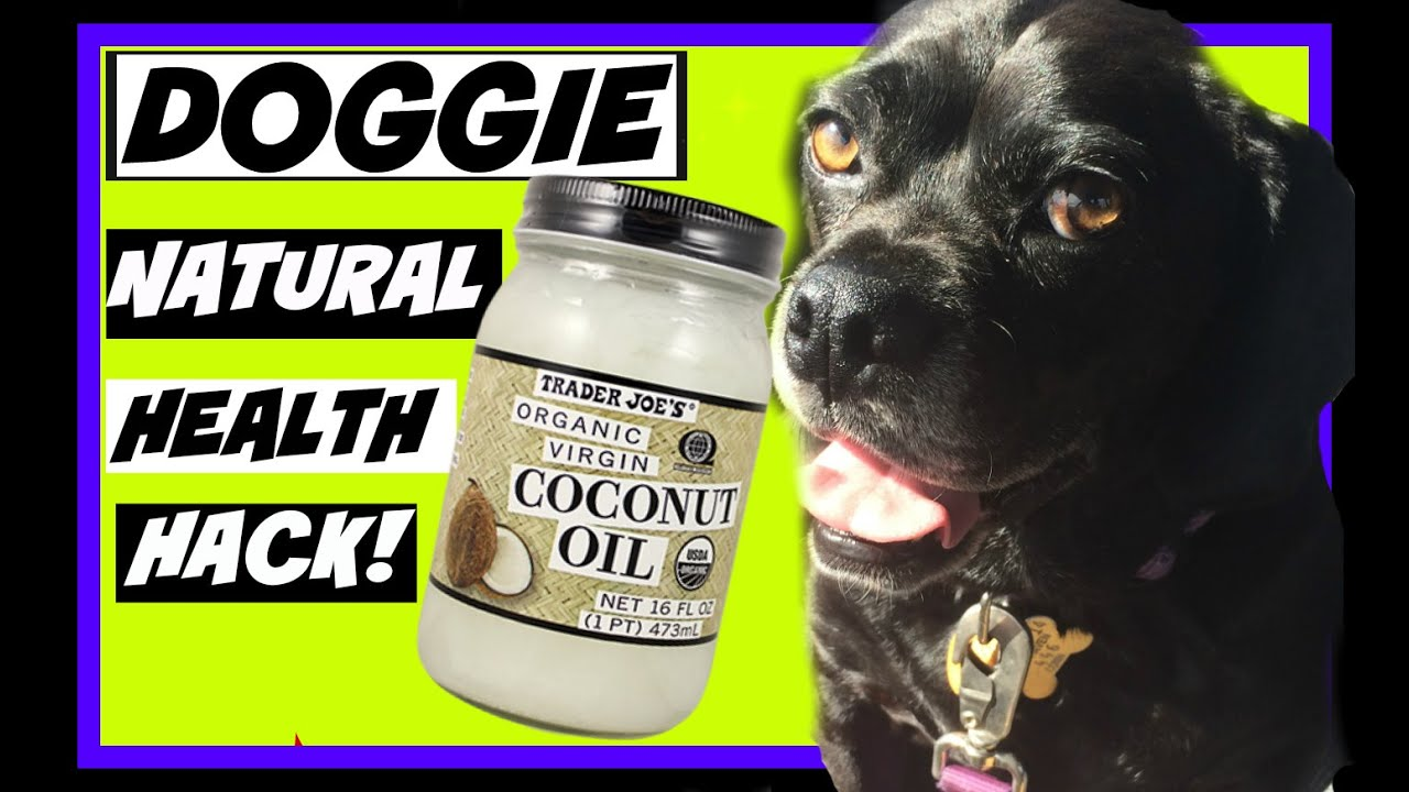 Coconut Oil For Dogs Uk