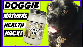 Coconut Oil Health Benefits Dogs