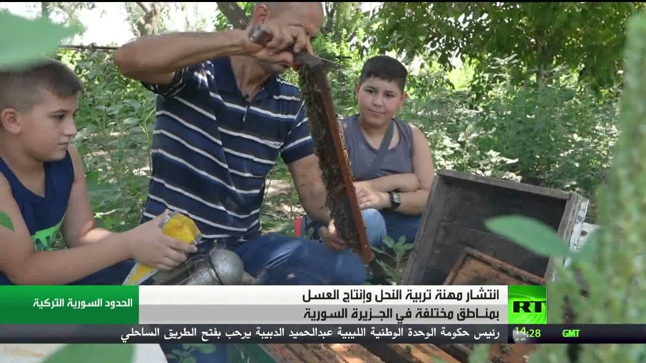 تربية النحل تزدهر في الجزيرة السورية  - نشر قبل 3 ساعة