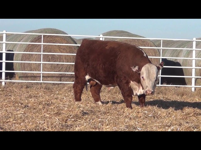 Express Ranches Lot 239