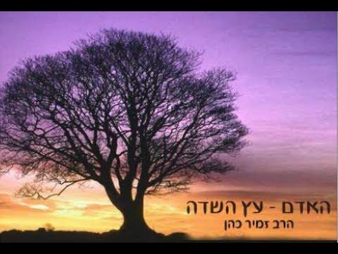 האדם עץ השדה (חדש)  הרב זמיר כהן