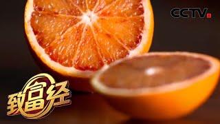 《致富经》 20200511 特别的橙子 火红的财富| CCTV农业