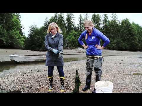 WaGrown Shellfish S2E4: Taylor Shelfish Farms