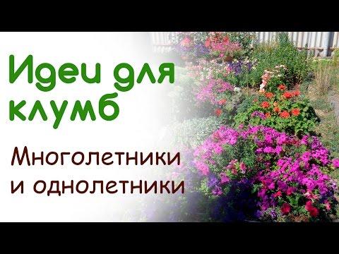 Ипомея — в саду фея! -