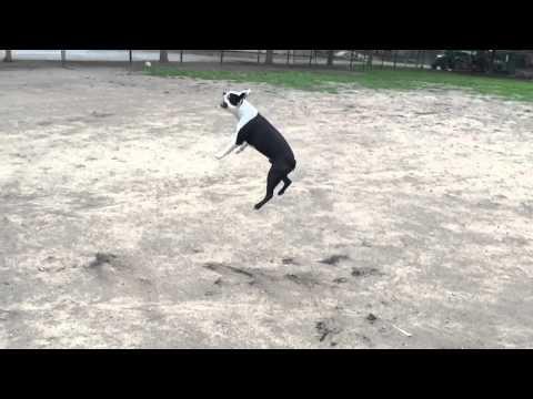Dog jump slow motion