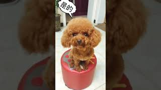[2019]Funny videos of cute dogs and cats 082