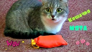 🍭 Первая реакция кошки на кочачью мяту Рюкзак Свинка Пеппа и Щенячий патруль(, 2016-09-18T07:03:33.000Z)