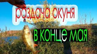 спиннинг рыбалка окунь Таких паклевок я не ожидал Раздача окуня в конце мая