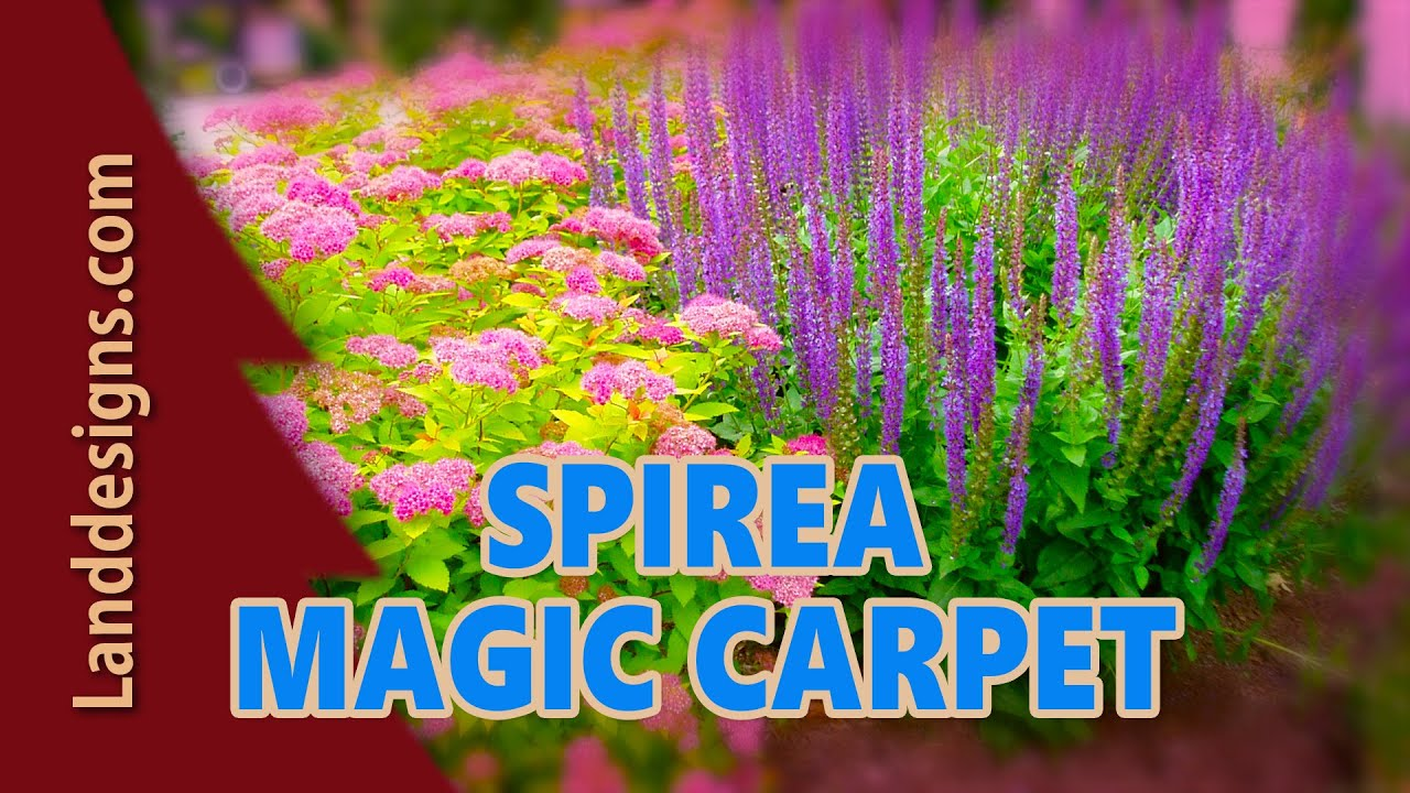 Des Moines Carpet Cleaning Images Go Green