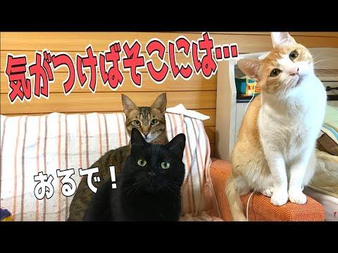 猫大集合!気がついたら猫たちに囲まれていました…
