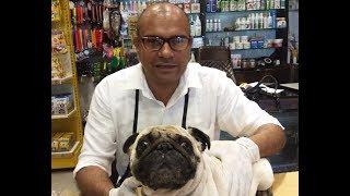 #Face Wrinkles #Earcleansing #Dog | By Baadal Bhandaari | 9878474748 (Pathankot)