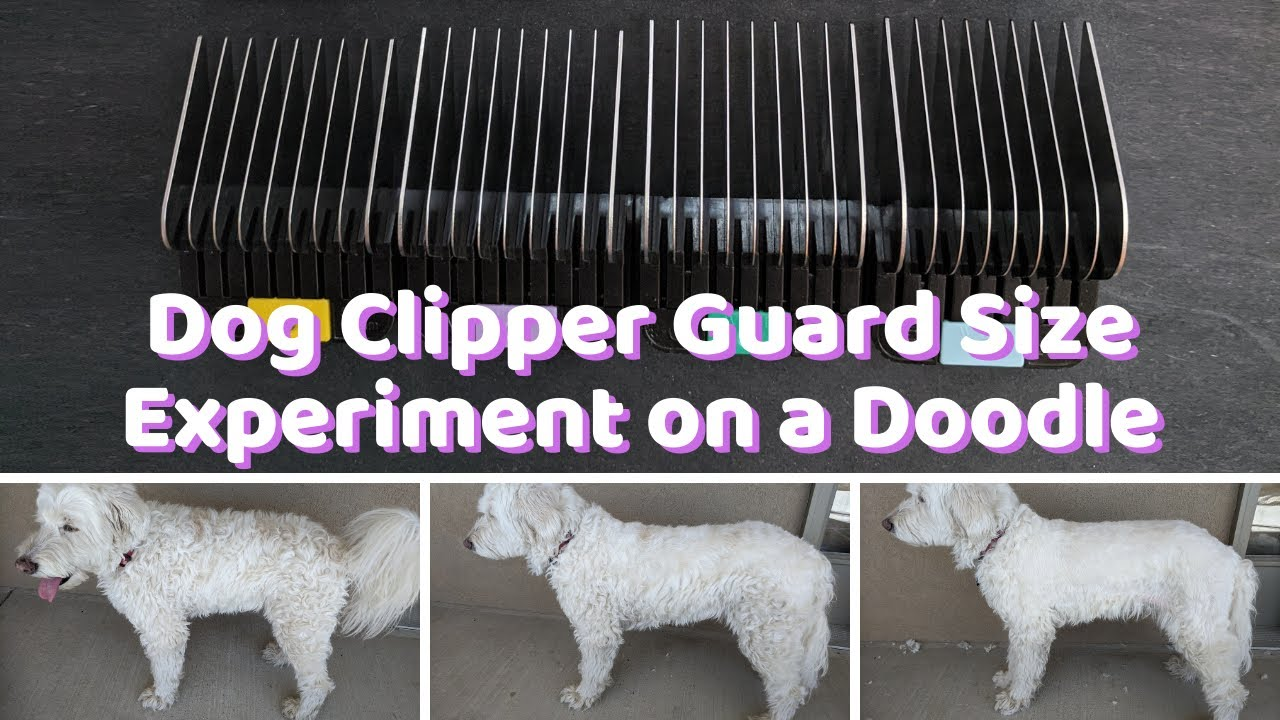 Dog Clipper Guard Size Chart Experiment On My Doodle Video Doodle Doods