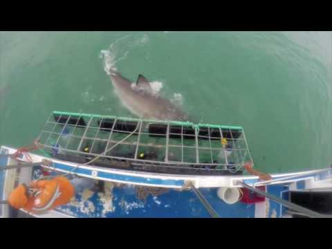 White Shark Cage Dive - Dyer Island, South Africa