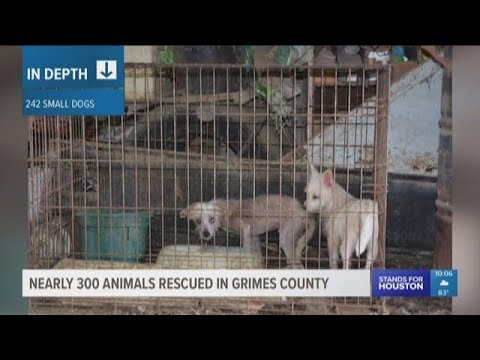 Nearly 300 animals rescued from home in Grimes County