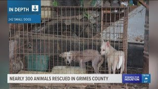 Nearly 300 animals rescued in Grimes County