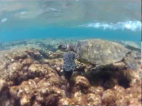 Snorkeling Ke'e Beach - Kauai