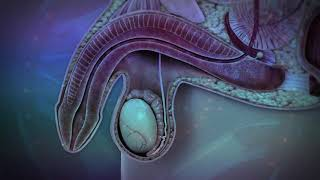 Sexual Dysfunction Rife Frequency | Isochronic Binaural Beats | Sound Healing Therapy-Rife Treatment