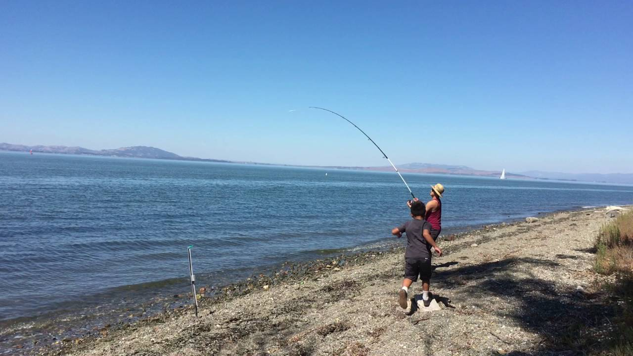 Sturgeon fishing san pablo bay california part 2 2 youtube for California out of state fishing license