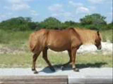 pictures of real cute ponies and horses aaarrrr youtube