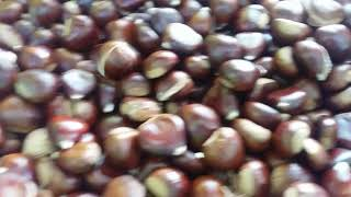 Americo Antonio & Pousa Comercio De Maquinas E Alfaias Agricolas,Lda PORTUGAL GIAMPI STAR 2000 CASTA