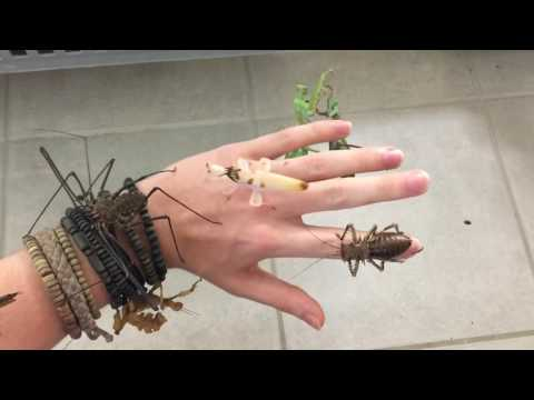 INSECTS ON MY HAND !