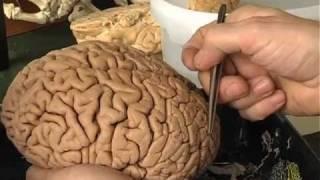 Braincast 119 -- Das Ding an sich 1/2
