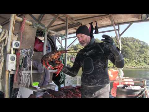 Wettie TV- Spearfishing Fiordland 2015 + How To Catch A Crayfish!