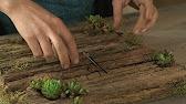 Купить суккуленты в минске. 91, независимости пр. , минск, беларусь. На фото одна из наших любимиц, миниатюрная эхеверия rundelli с изящным.