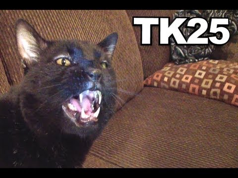 Thumbnail: Talking Kitty Cat 25 - A Very Angry Kitty Cat