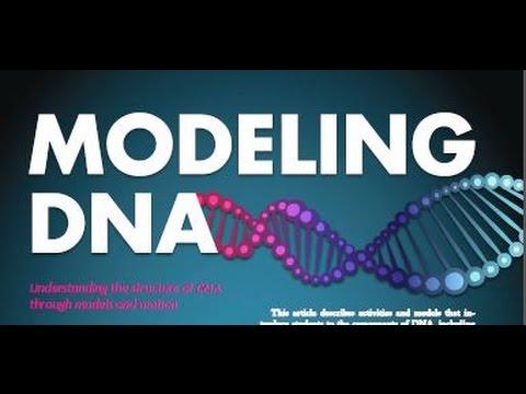 Summer 2016: Modeling DNA