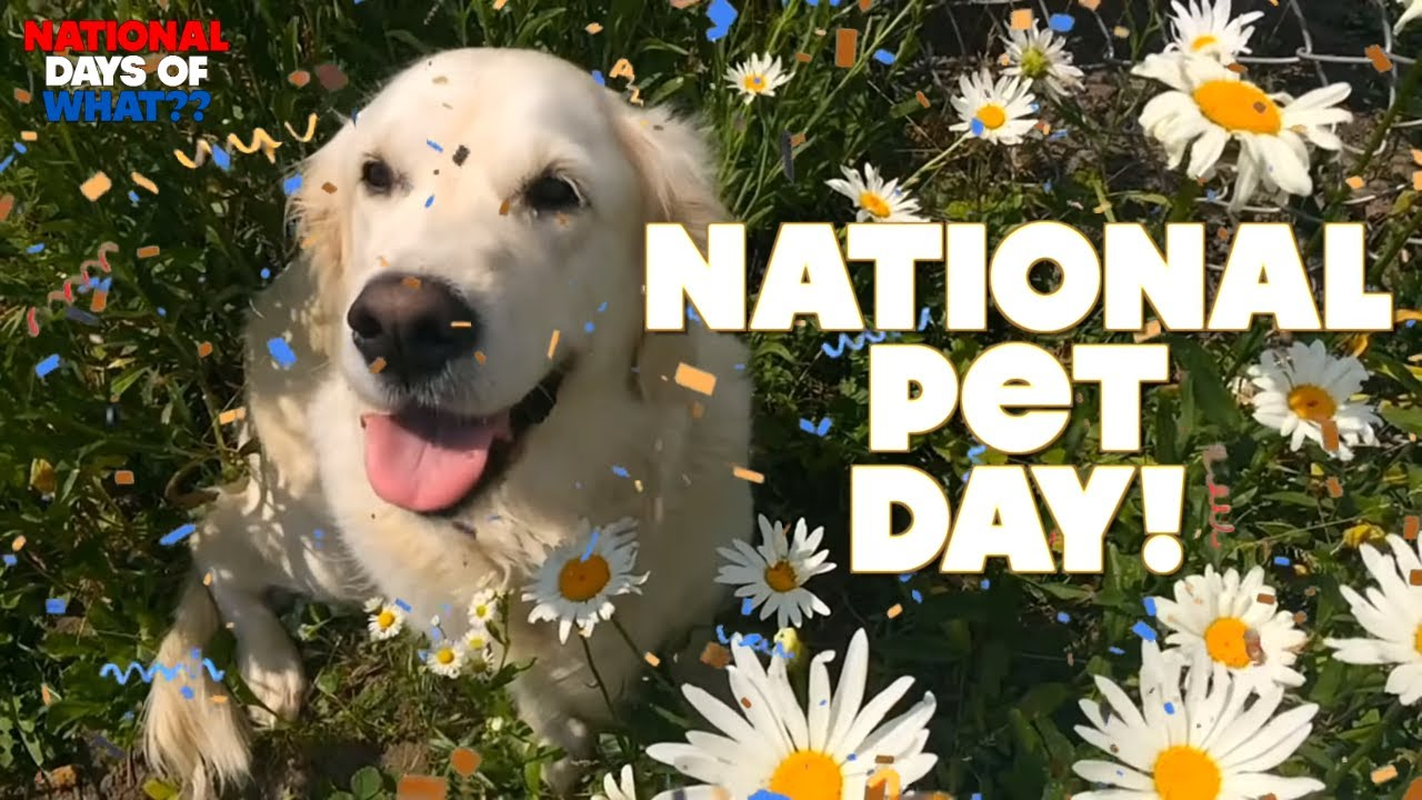 National Pet Day 2021: The best deals to shop for your dog or cat