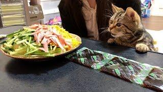 巨大冷やし中華の香りに耐えられず邪魔しに来てしまった猫w