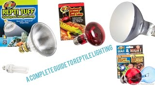A Complete Guide to Reptile Lighting!