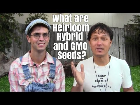 What are Heirloom, Hybrid and GMO Vegetable Seeds and More
