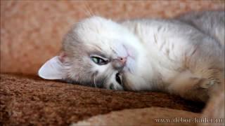 Самое страшное видео с котом