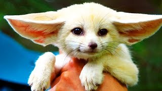 10 Animals People ACTUALLY OWN AS PETS!?!