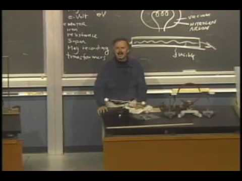09 Physics 10   Lecture 09  Electricity and Magnetism