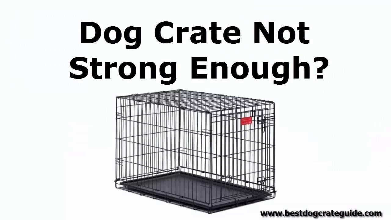 Heavy Duty Gorilla Tough Indestructible Escape Proof Dog