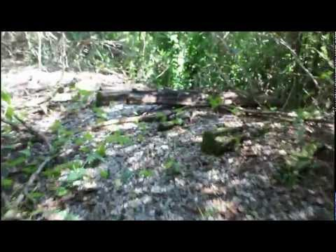 Forgotten Fort Wilderness Railroad - Hidden WDW History