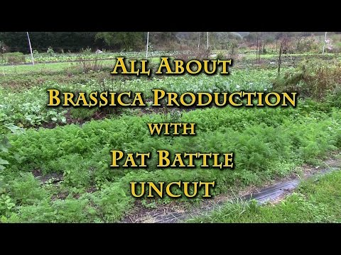 All About Brassica Production with Pat Battle UNCUT