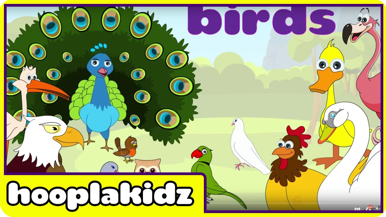 Learn About Birds - Preschool Activity - YouTube